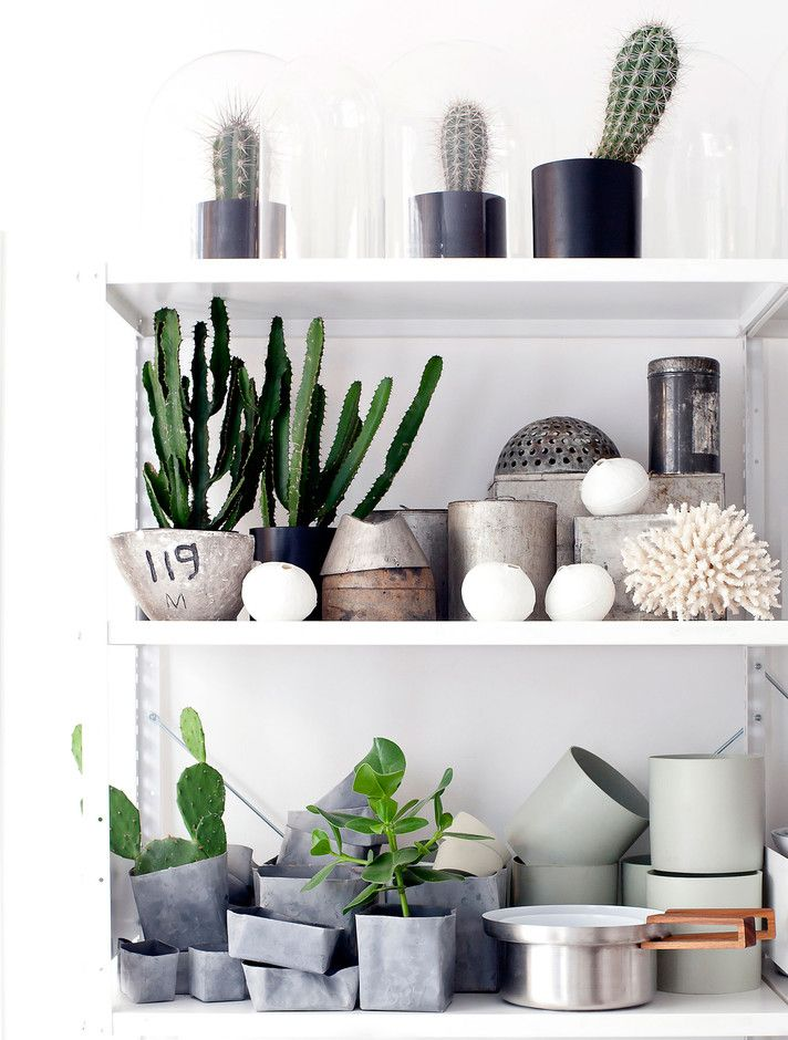 plants-in-the-home-pinterest-15