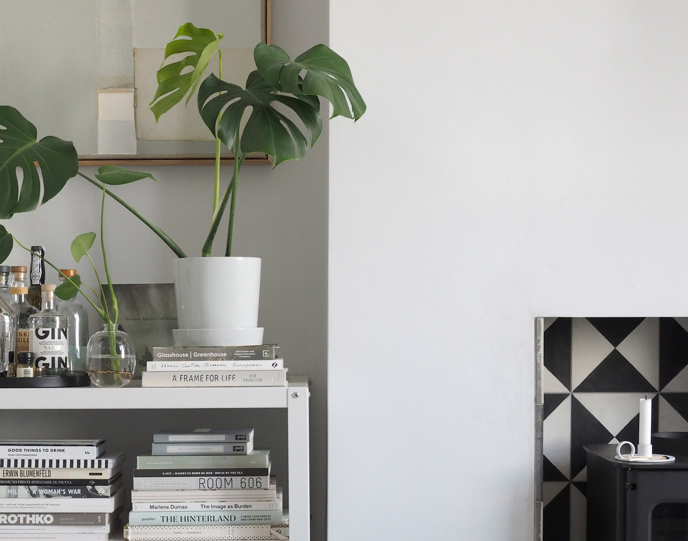 A Guide To Propagating A Monstera Plant Catesthill Com